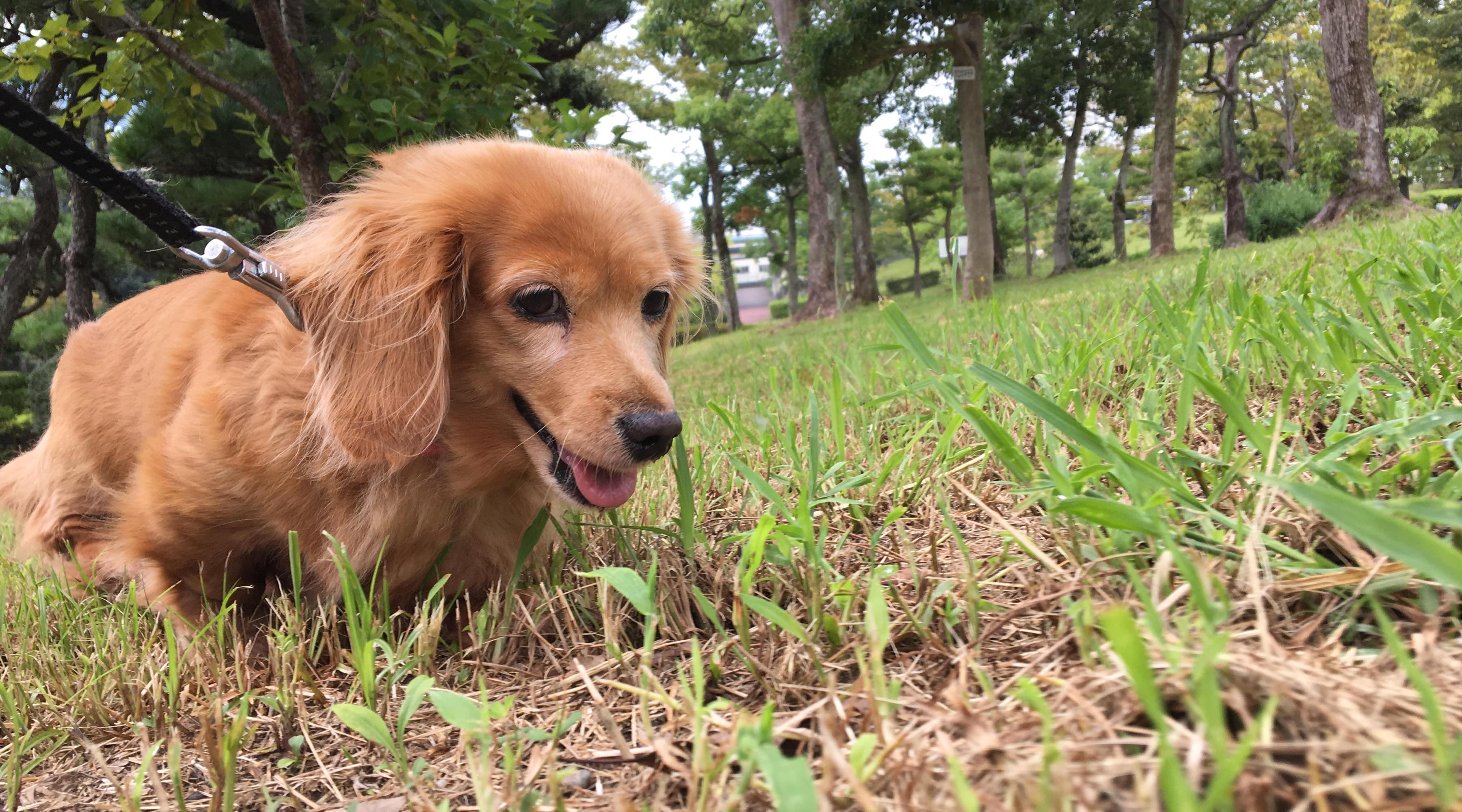 Nozomi Enjoying Yesterday Morning's Walk