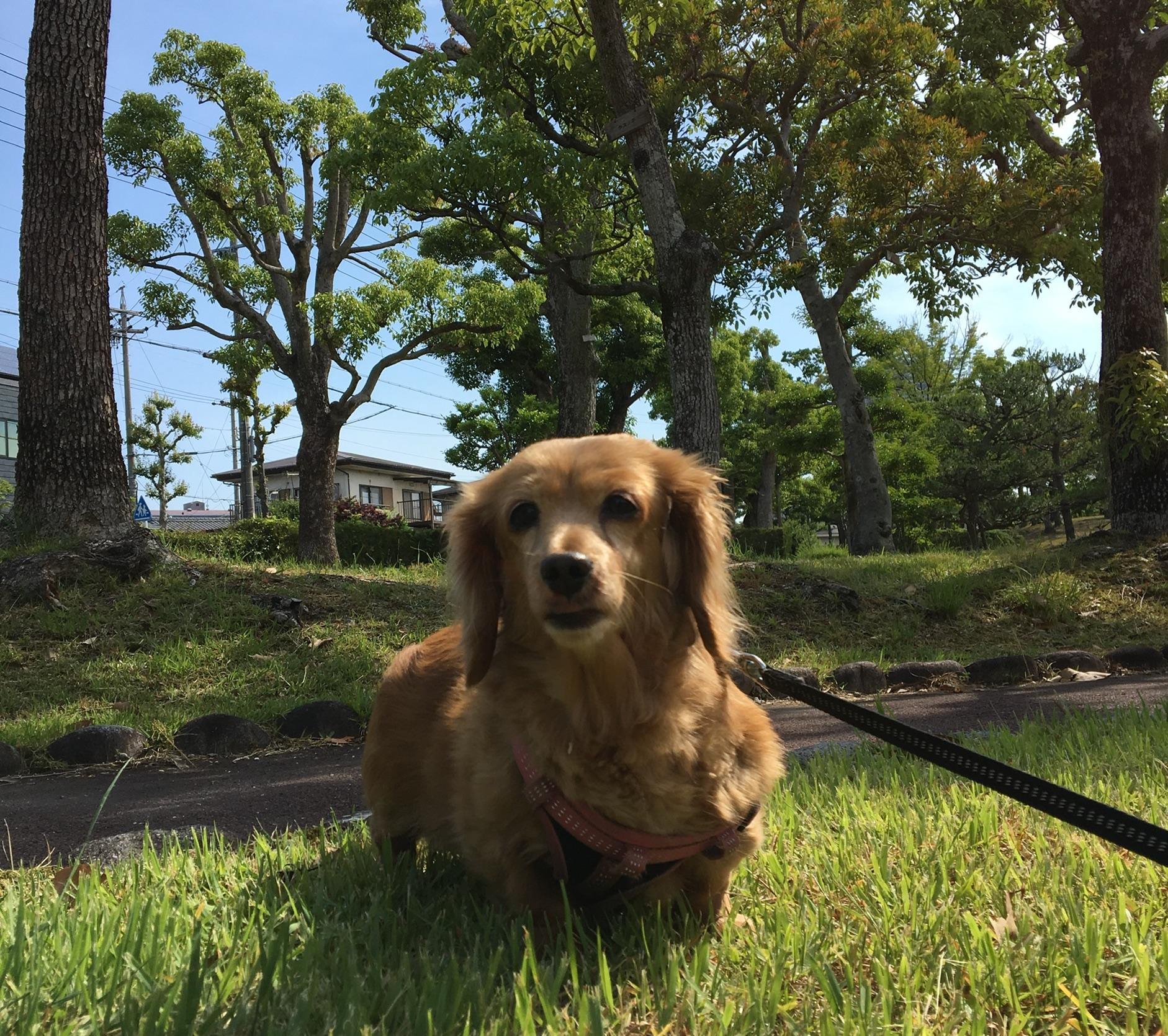 Nozomi Enjoying a Walk